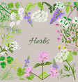 card with herbal flowers vector image vector image
