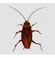 brown cockroach on transparent background vector image vector image