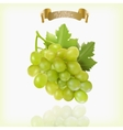 Bunch of yellow or green grapes with vine leaves vector image vector image