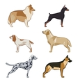 Dogs icons set vector image