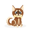 husky puppy isolated playful purebred brown husky vector image vector image