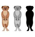 set of meerkat character vector image