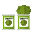 Spinach in tin Useful Herbs Green lettuce leaves vector image vector image