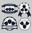 the theme blackberry vector image vector image