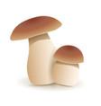 white mushroom vegetable healthy food mushrooms vector image