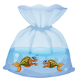 A pouch with fishes vector image vector image