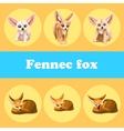 Cute set fennec fox on a yellow background vector image vector image