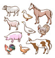 farm rural and domestic meat animals set vector image