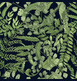 fern green foliage on black background hand drawn vector image