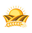 field with ripe wheat ear vector image