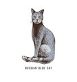 hand drawn russian blue cat vector image