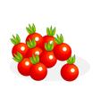 icon cherry tomato vector image vector image