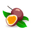 passionfruits with leaves on white background vector image