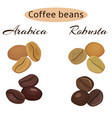 types of coffee beans arabica and robusta vector image vector image