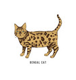 hand drawn bengal cat vector image vector image