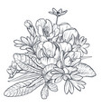 hand drawn bouquet of spring flowers and vector image vector image