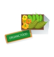 Box With Squash Bell Pepper And Cucumbers Fresh vector image