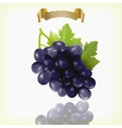 Bunch of blue purple black Isabella grapes with vector image vector image