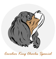 Cavalier King Charles Spaniel vector image vector image