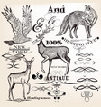 collection of hand drawn animals and flourishes vector image vector image