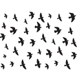 Flying birds isolated on white vector image vector image