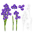 dark blue purple iris flower vector image