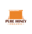 frame with honeycombs vector image vector image