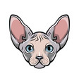 sphynx hairless cat vector image vector image