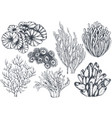 collection of hand drawn ocean plants and vector image vector image