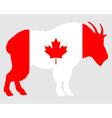 Mountain goat Canada vector image