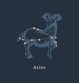zodiac constellation aries in engraving style vector image