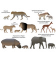 animals of africa with cubs vector image vector image
