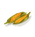 beautiful corn vector image vector image