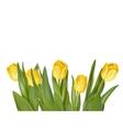 Bouquet of yellow tulips EPS 10 vector image vector image