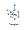 Camphor chemical formula c10h16o vector image