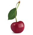 Cherry with leaf vector image vector image
