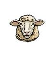 front view sketch portrait domestic farm sheep vector image vector image