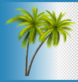 green coconut palm vector image vector image
