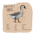 part of goose hand draw sketch vector image
