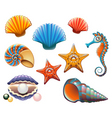 seashell set vector image vector image