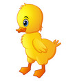 cute little baby duck isolated on a white backgrou vector image vector image