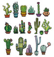 set of colorful succulents and cactuses vector image vector image