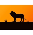 silhouette lion on the background of sunset vector image vector image