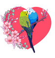 couple lovely budgies kissing on a branch vector image