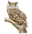 engraving drawing eagle owl vector image