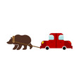 tow in russia russian bear and car traditional vector image