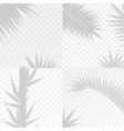 bamboo and palm branches leaves overlay effect vector image vector image