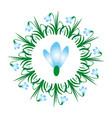 colored circular spring mandala flower snowdrop vector image