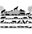 pack wolves vector image