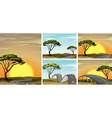 road scenes in savanna field at sunset vector image